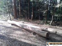 sternwald-trimm-dich-pfad-6