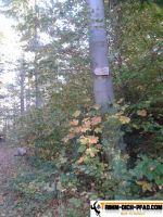 sternwald-trimm-dich-pfad-15
