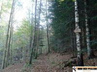 sternwald-trimm-dich-pfad-10