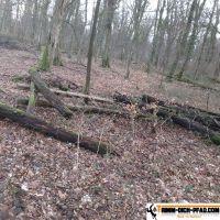 trimm-dich-pfad-mooswald-seehau-11