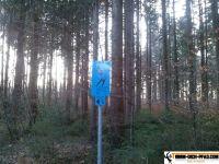trimmd-ich-pfad-gruenwald-39
