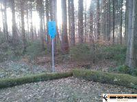 trimmd-ich-pfad-gruenwald-40