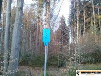 trimmd-ich-pfad-gruenwald-21