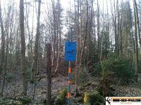 trimmd-ich-pfad-gruenwald-8
