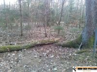 trimmd-ich-pfad-gruenwald-36