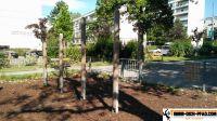 street_workout_park_wien_ottakring_wien_03