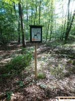 Waldsportpfad_Reilingen_06